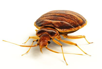 tick control services in Rockville